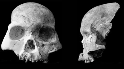 Red Deer Cave People skull structure