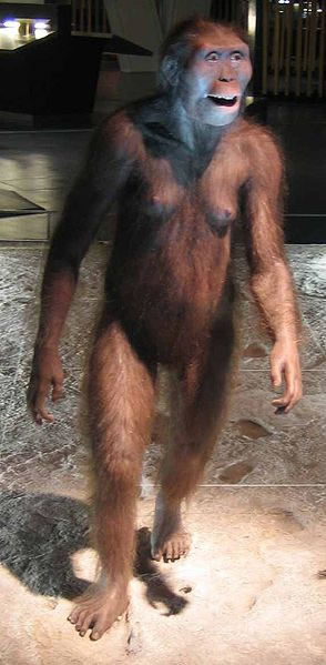Reproduction of Australopithecus afarensis