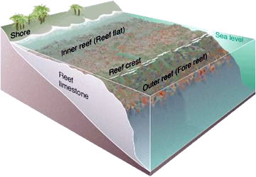 Reef Diagram