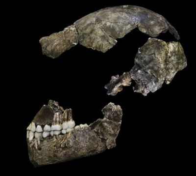 Homo naledi skull. Source: eLife Sciences