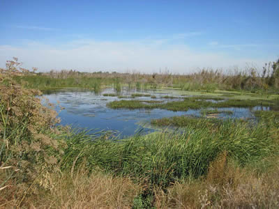 A wetland is a region where groundwater is found at the Earh's surface.