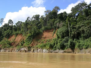 Amazon Rainforest in Peru